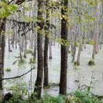 Forest near Gierloz - Poland, Wolf's Lair
