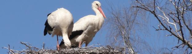 European stork village in Poland