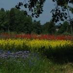 Meadow Poland
